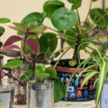 'I turned my flat into a jungle on the cheap'